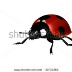 stock-photo-little-lady-bird-on-white-background-39705268