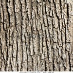 stock-photo-old-wood-tree-texture-background-pattern-125116679