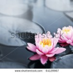 stock-photo-pink-lotus-blossoms-or-water-lily-flowers-blooming-on-pond-64128967