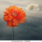 stock-photo-poppies-against-the-sky-with-a-cloud-vintage-blossom-flower-feeling-of-spaciousness-192760967