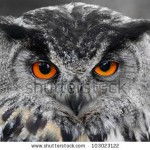 stock-photo-portrait-of-the-eurasian-eagle-owl-bubo-bubo-103023122