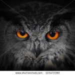 stock-photo-the-evil-eyes-eagle-owl-bubo-bubo-103472390