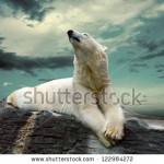 stock-photo-white-polar-bear-hunter-on-the-ice-in-water-drops-122984272