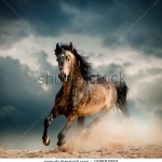 stock-photo-wild-stallion-in-dust-159883082
